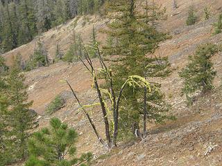 Views from Miller Peak trail.
