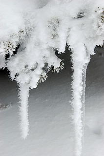 Hoar frost on icicles