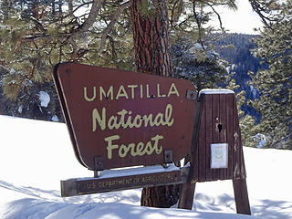 My first time in this national forest.