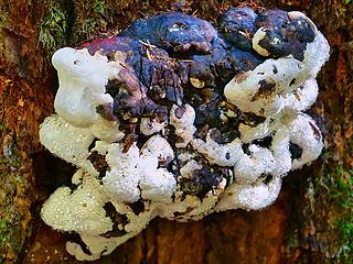 Wet fungus