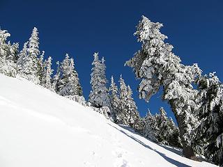 I like frosty trees