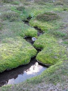 Mossy waterway