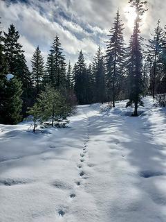 following tracks