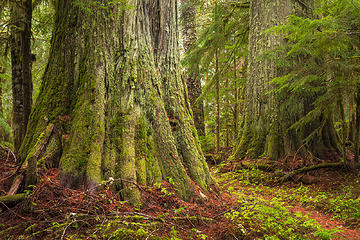 "Mount Baker-Snoqualmie National Forest, Washington Portfolio: <a href=""http://www.lucascometto.com"" target=""_blank"">www.lucascometto.com</a>"
