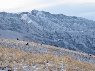 Elk and Mt Wilson.