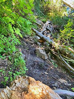 Upper Lena trail