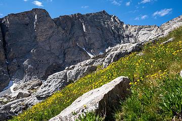 floral ascent