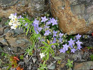 Wildflowers growing between the rocks at 5375 ft/6.9 mi