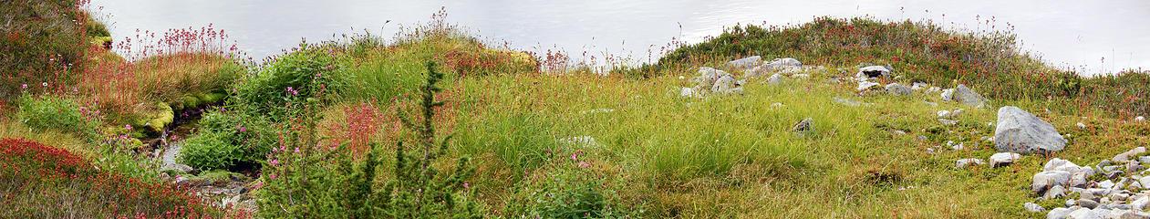 meadow25