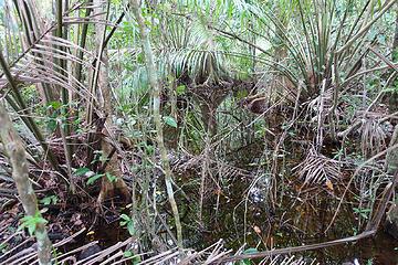 Cahuita Swamp