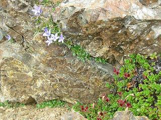 Wildflowers growing between rocks at 5350 ft/6.85 mi