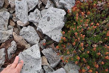 rhyolite ash-flow tuff of Hannegan caldera on Hannegan Peak