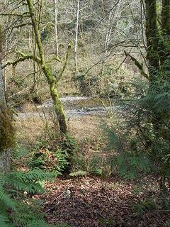 Swan Creek Park 022120 03