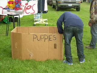 Mmmmm, puppies.