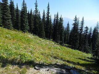 First meadow to cross, head gently downward across it.