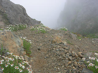 Daisies lining the trail at 5250 ft/6.75 mi