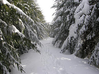 Rattlesnake trail in the snow