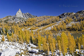 larch perfection