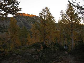 Sunglow and Larches