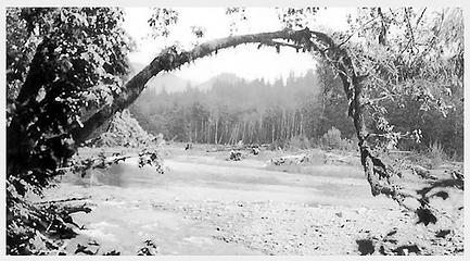 Smith Place - Queets Valley - ca. 1929 - view west from vicinity of Smith Place - photo courtesy L. Vaughan