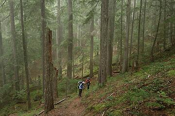 Hiking up through the foggy forest