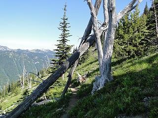 Looking back down Crystal Peak trail.