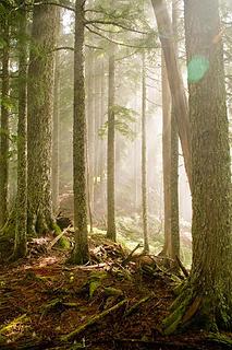 Forest on Black Jack Ridge