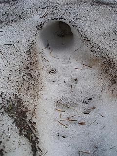 Old pocket gopher tunnel