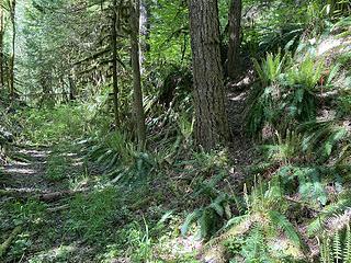 Trail leaving road