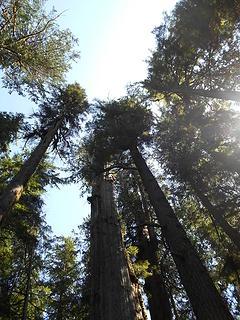 Cedar Grove Trail 082219 10