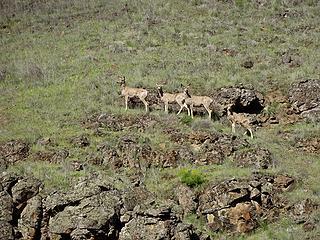 Wildlife in the wildlife area.