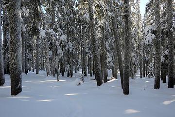Hiking through the woods toward Thomas