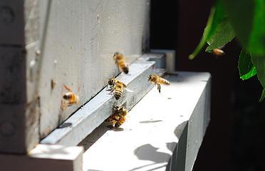 2019 Ballard bees