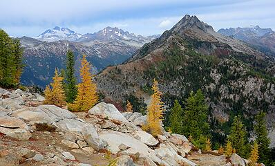 Larches with Glacier, Clark, Bandit, and Buck