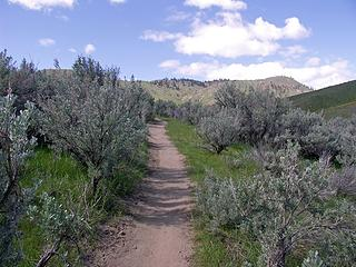 Section of The North sage Hills trail. A hiking, biking, running group of interconnecting trails on Wenatchees West foothills border