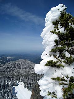 lopsided snow-caked tree