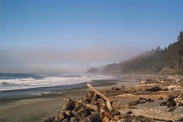 kalaloch-beach-4-1205-2