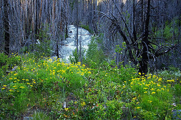 Methow River silvery river, flowers, burned trees