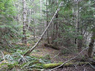 much of the abandoned logging road(s) looked like this