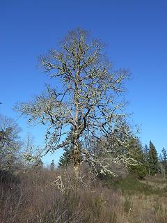 West Rocky Prairie Wildlife Area 022020 15