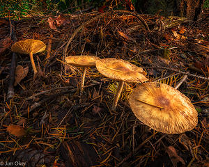 4 toadstools (1 of 1)