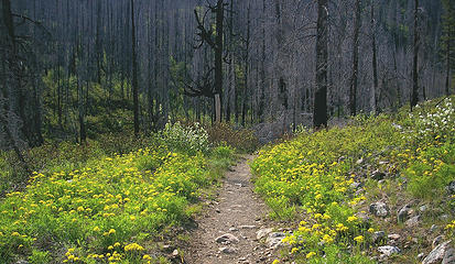 Methow River trail1
