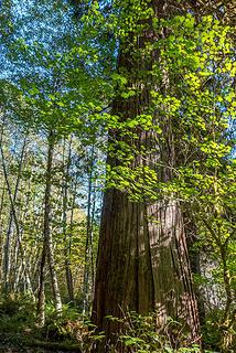 Jul: Big tree