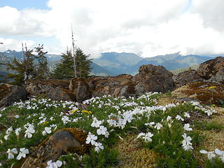 More summit flowers