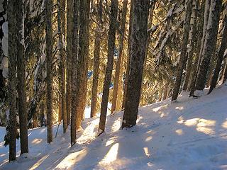 Descending through the trees