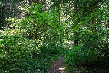 East Fork Foss River Trail