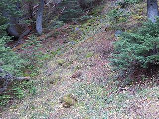 Once past the upper junction of the Scott Paul and Park Butte trails,  you come to a forested ridge just past a small stream. This is a late Pleistocene lateral moraine from a much larger Easton Glacier. Note how this inner slope is stable and vegetated.