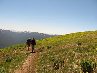 Acres of Glacier Lillies
