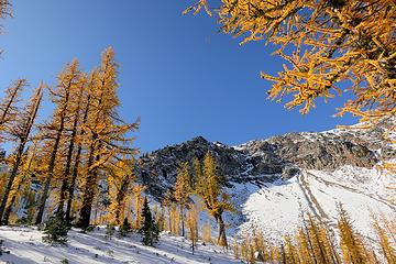 Larches south of Harts Pass