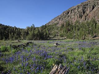 Mount Rose Wilderness, NV